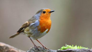 30-ans-oiseaux-jardin-baisse-24-disparition-854x569